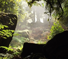 morning light through the native forest at Hobbit film location Piopio